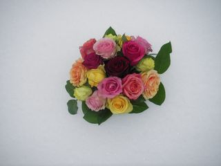 Roses_Snow_2