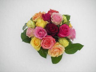 Roses_Snow_10